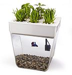 Back to the Roots Aquafarm Self Cleaning Fish Tank $30