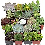 Shop Succulents Unique Succulent: Collection of 4 $13 (32% Off), Collection of 20 $28 (30% Off)