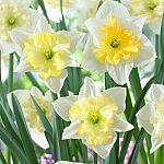 Lowe's: Plant Bulbs (Daffodils, Tulips & More) 50% Off
