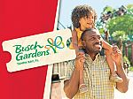 Busch Gardens Tampa Bay Summer Flash Sale 1-Park Ticket: $45 and more