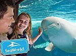 SeaWorld Orlando Single Day Ticket  - Kids Free
