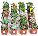 Succulents from $13 (Saving up to 30% off)