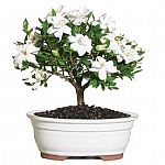 25% Off Select Brussel's Bonsai Plants and Accessories