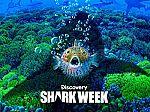 Discovery Channel Shark Week [Season 2019] $1.99