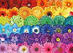 1000 Piece Buffalo Games Jigsaw Puzzle:  Blooms of Color $7 & More