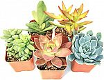 12-pack Succulent Plants Fully Rooted in Planter Pots with Soil $22, 5-pack $14